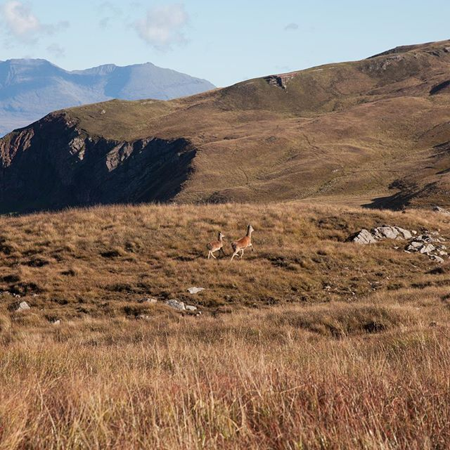 Rutting season on Rùm 🦌🦌 Chapter 4. The Small Isles