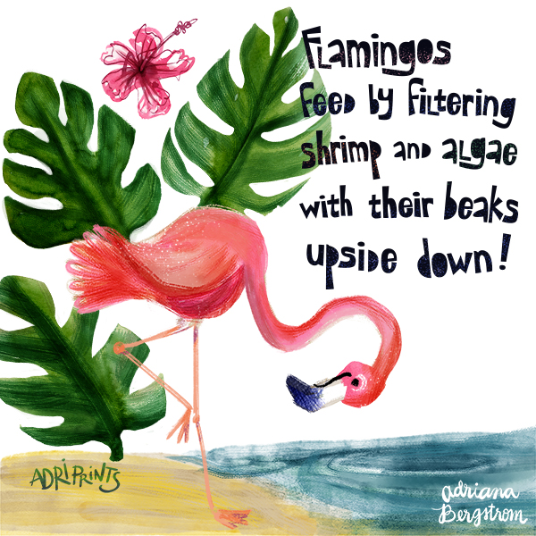 flamingo_fact1.jpg