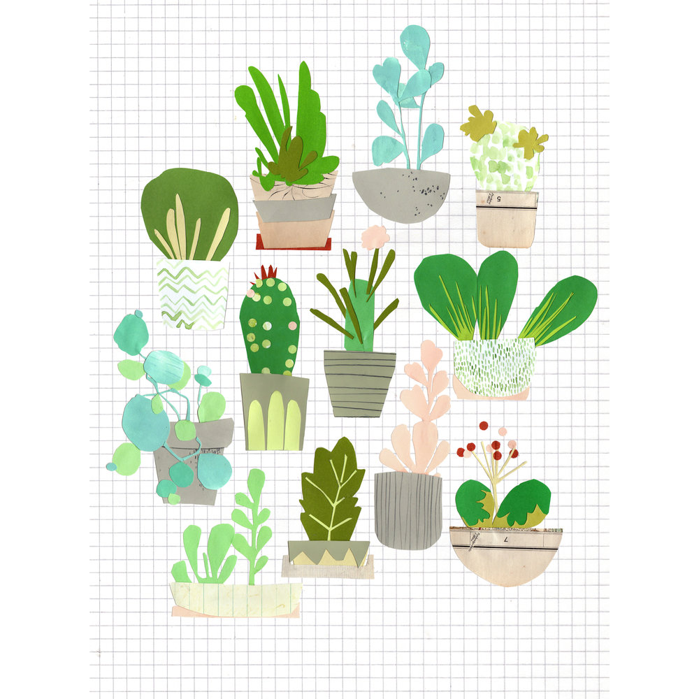 Bryony-Succulents-Cacti.jpg