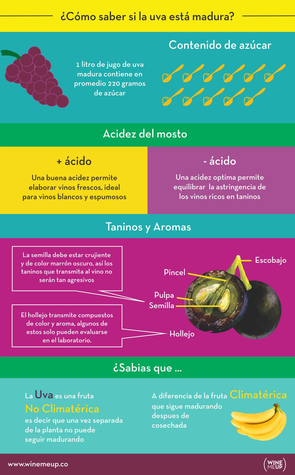 madurez de la uva