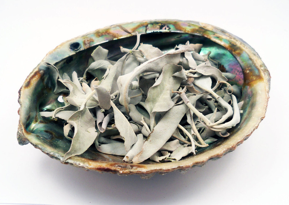 Abalone shell filled with White Buffalo Sage