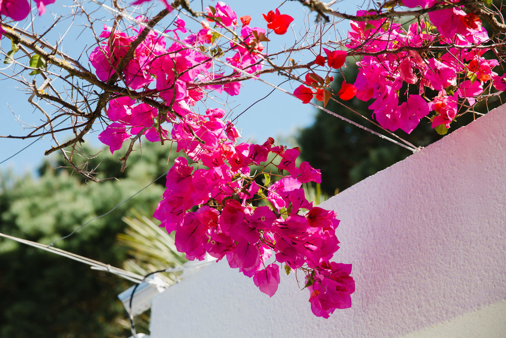 bright pink flowers against white washed walls