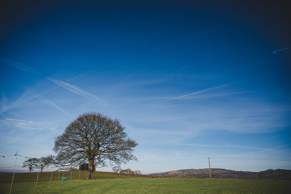 Heaton House Farm Oak Tree in Field