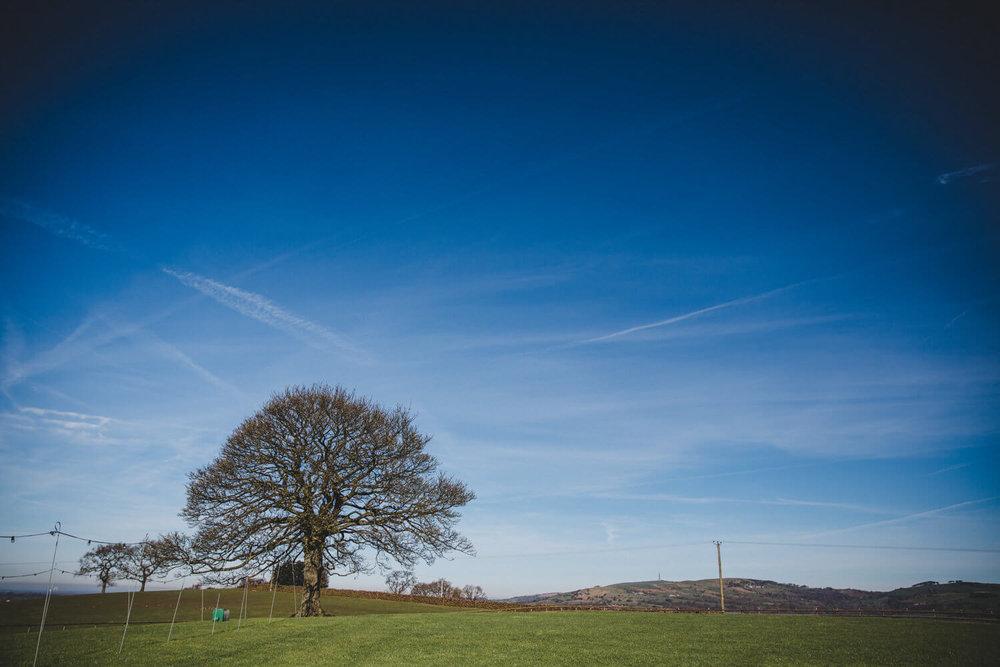 Heaton House Farm Oak Tree in Field
