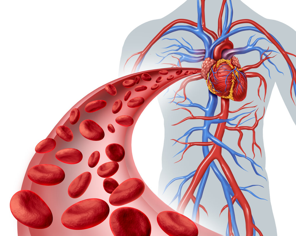 Max Pulse Heart Screenings - 3 minute/non-invasive