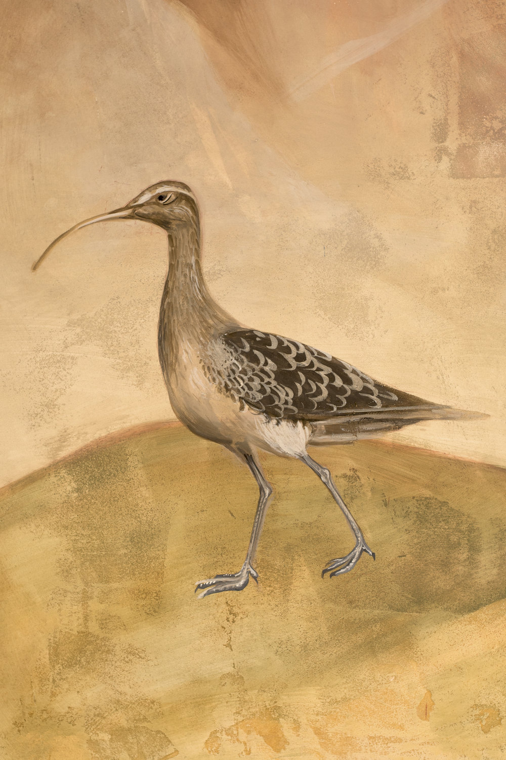 A curlew. Anyone who has roamed on the Moors around Lancashire will be familiar with its haunting call.