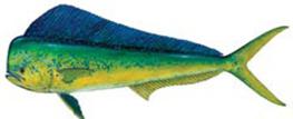 Fish_Dolphin.jpg