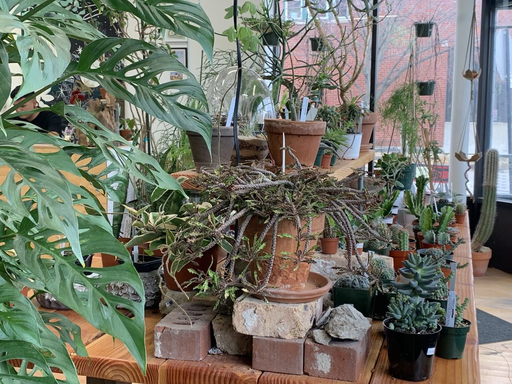 Plant Shop is the perfect little shop that is packed with beautiful plants for your window sill or corner in your room that needs some greenery.