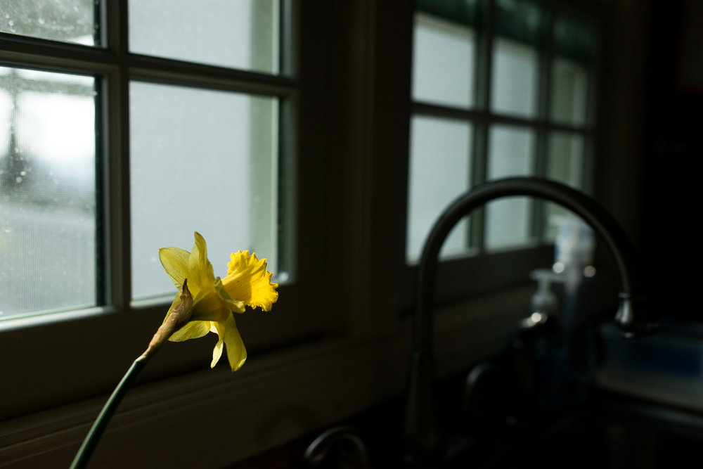 pittsburgh-family-photographer-82.jpg