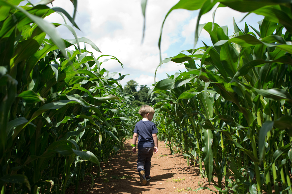 We had lots of fun in the Maize Maze. Harrison made sure we didn't get lost by using his trail leaving navigation skills.