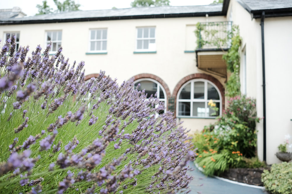 lavender outside at the lord haldon hotel in devon