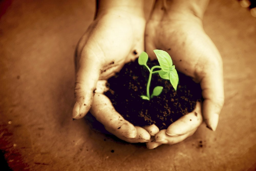 Plant-on-hands-000045717154_Large.jpg