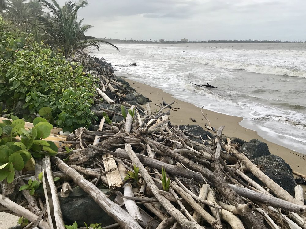 Debris on the beach.