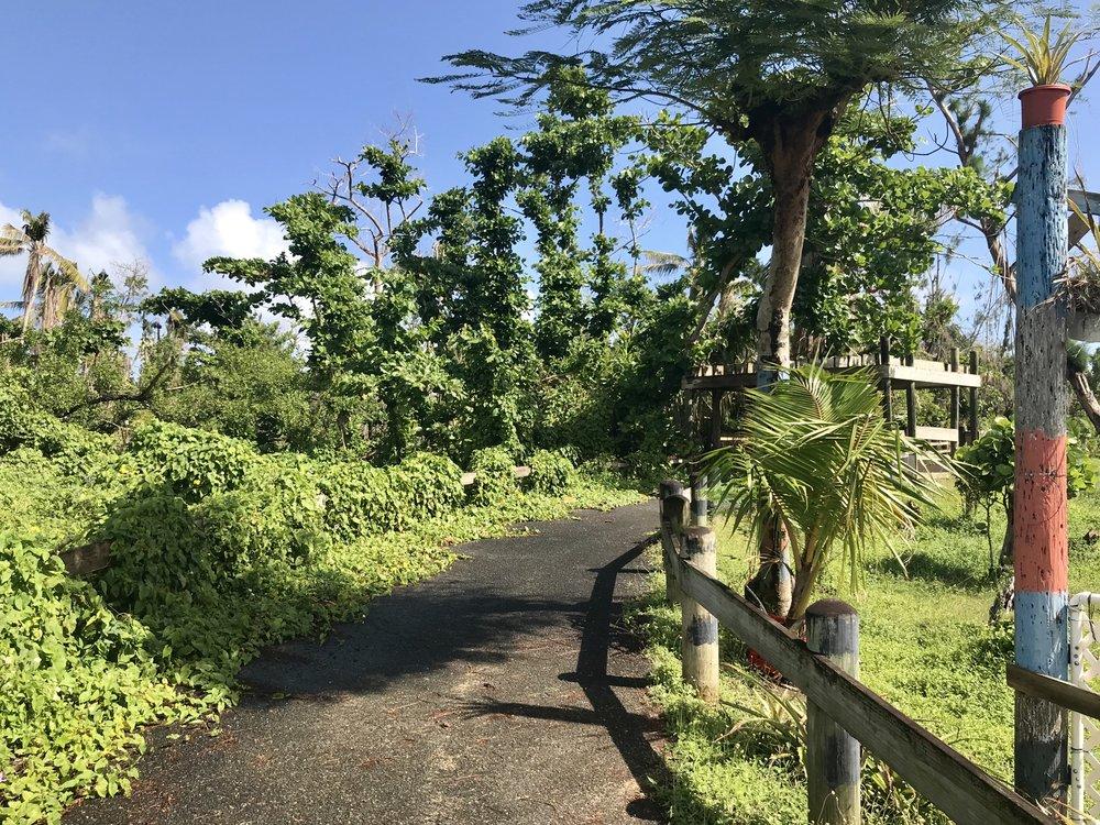 The bike path near Loiza.