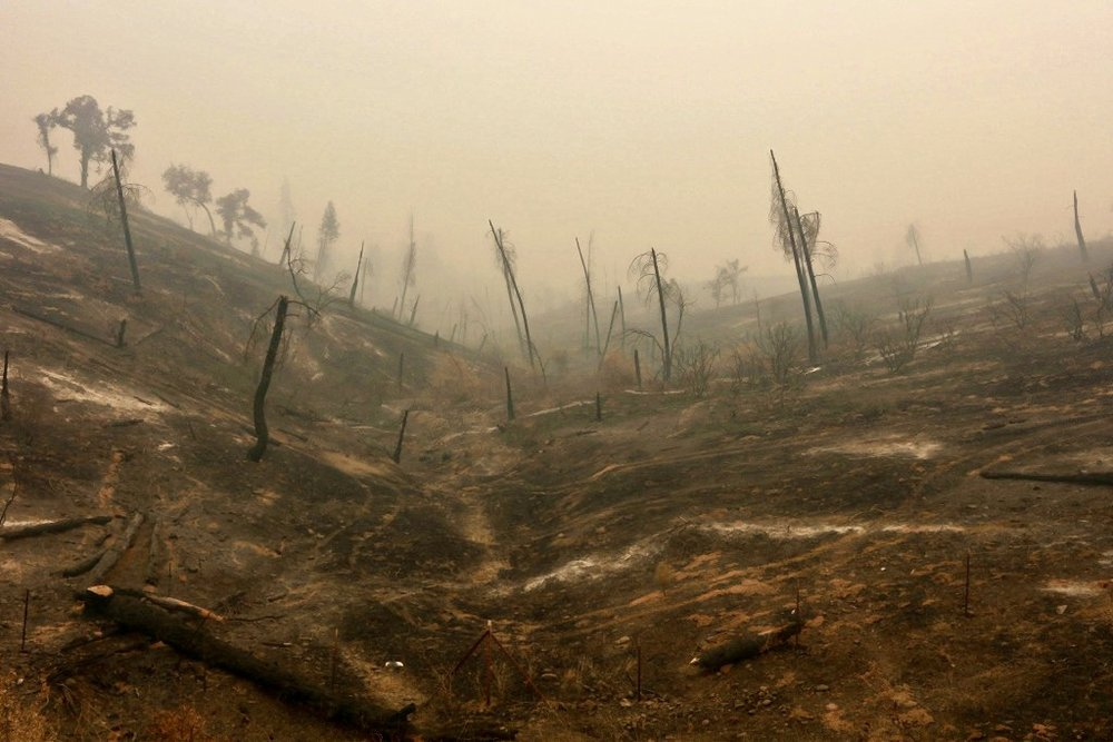 A burned hillside in California after the Carr Fire.  Photo uncredited*