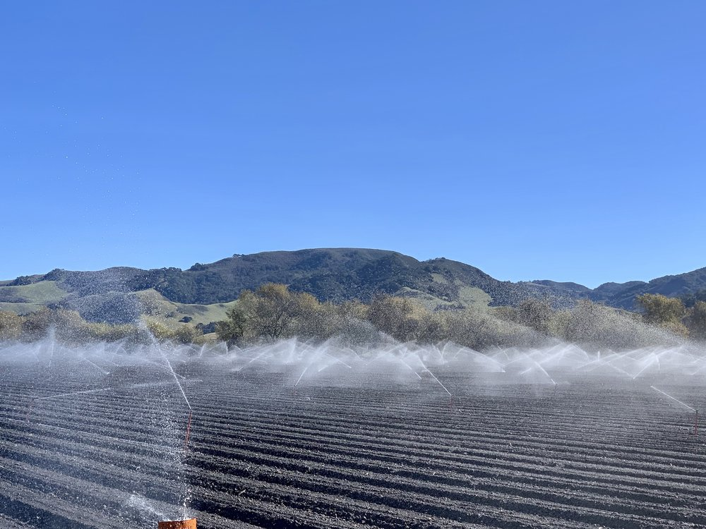 Irrigation on a basil field just north of Lompoc.
