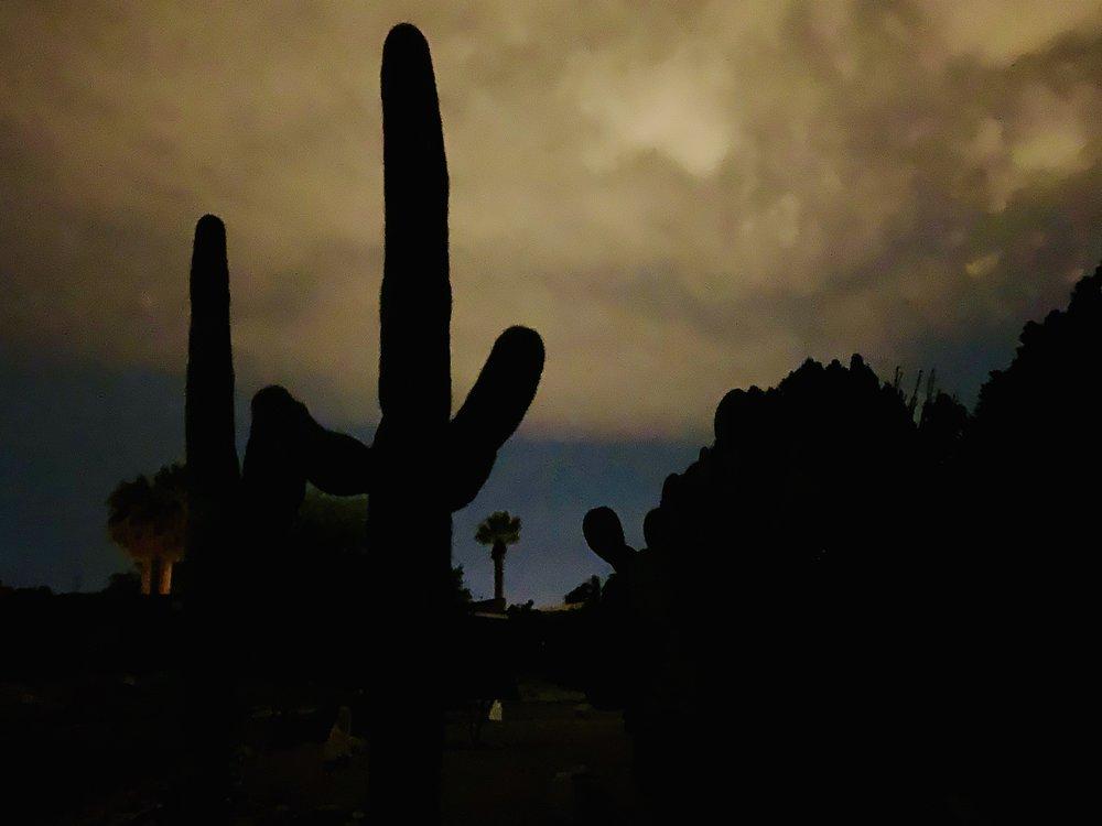 Twilight behind a sugaro cactus in Tucson.