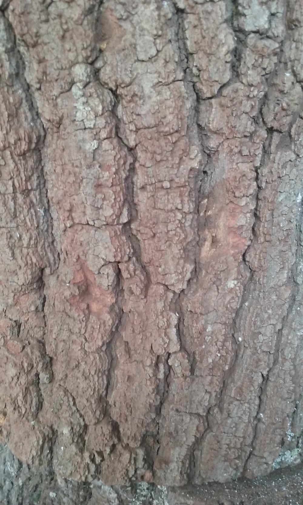 bark.after.jpg