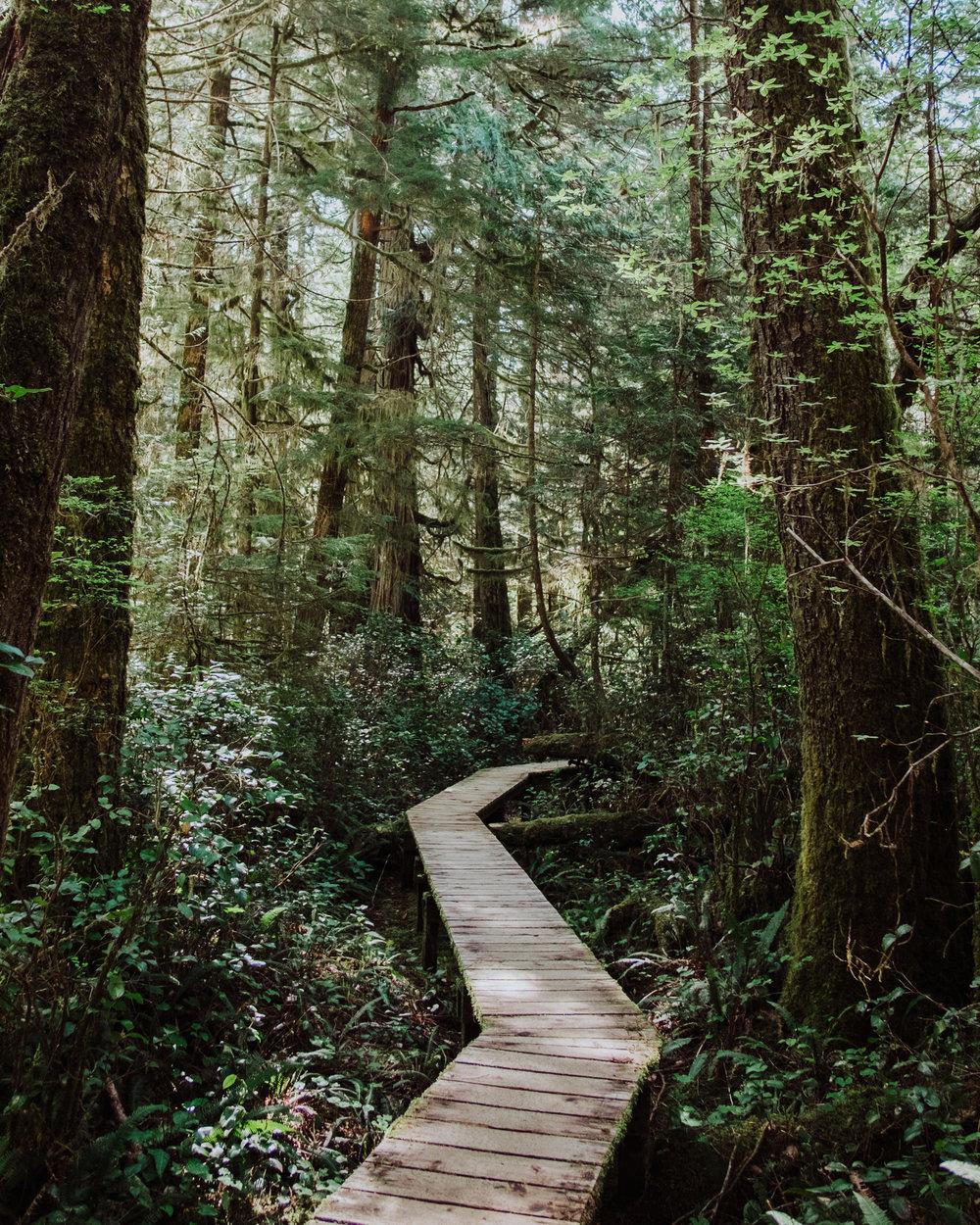 Rainforest Trail, Pacific Rim National Park Reserve