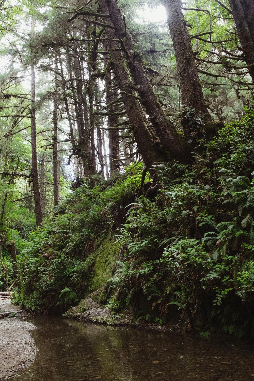 fern-canyon-prairie-creek-orick-vivianchen-5941.jpg