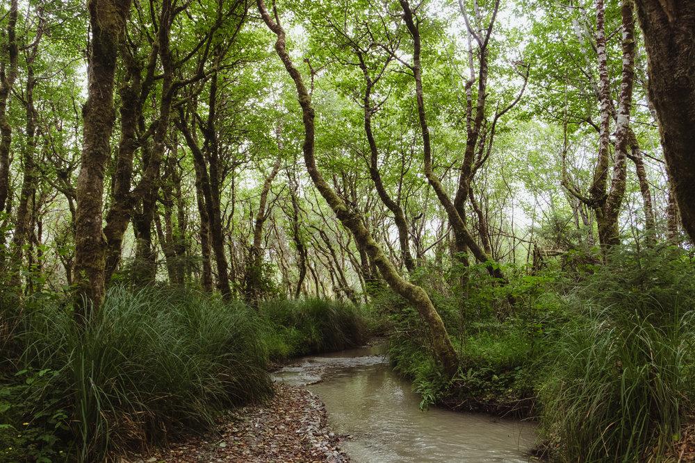 fern-canyon-prairie-creek-orick-vivianchen-5929.jpg