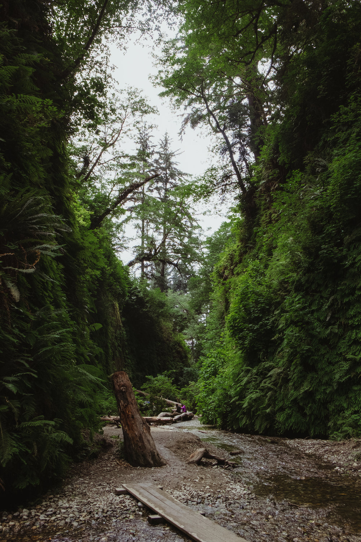 fern-canyon-prairie-creek-orick-vivianchen-5958.jpg
