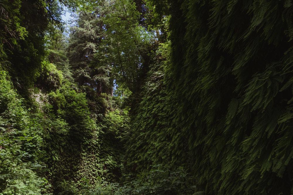 fern-canyon-prairie-creek-orick-vivianchen-5967.jpg