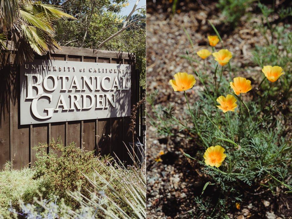 Lgbtq Uc Berkeley Botanical Garden Wedding Vivianchen 001.
