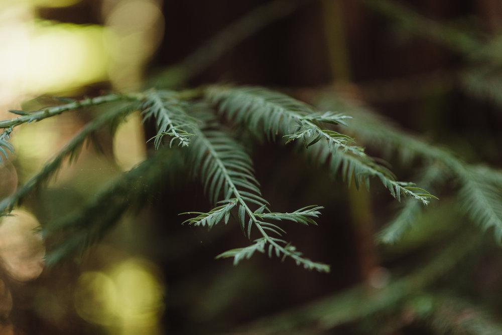 lgbtq-uc-berkeley-botanical-garden-wedding-vivianchen-010.jpg