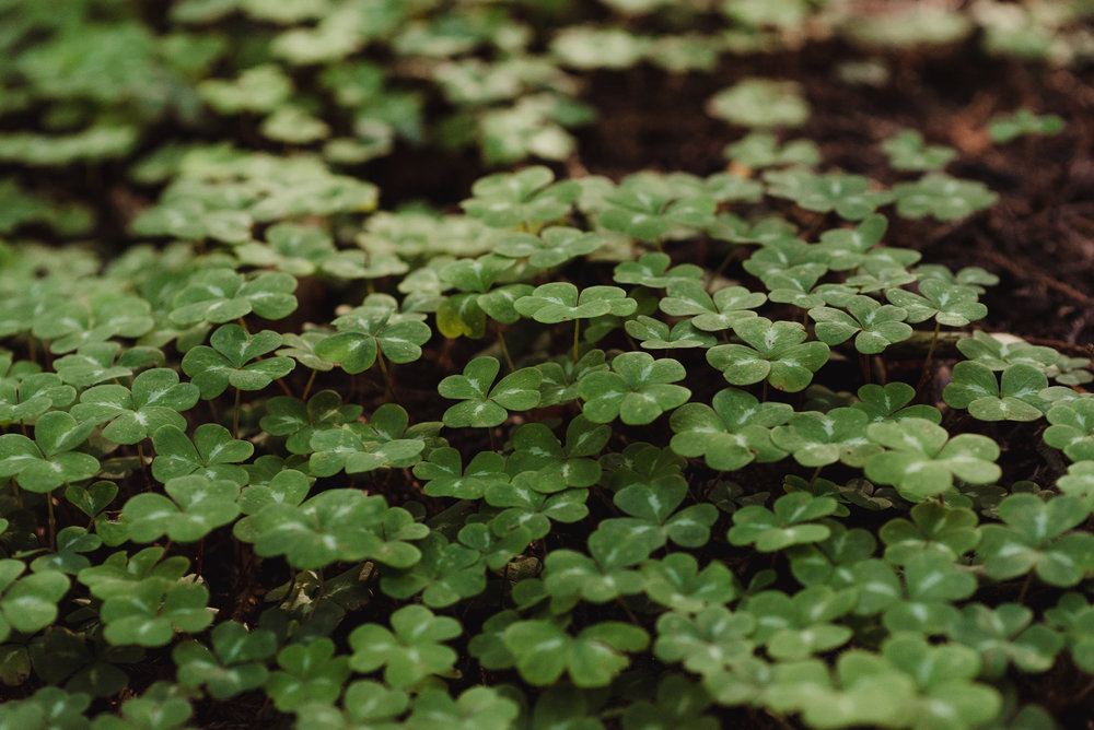 lgbtq-uc-berkeley-botanical-garden-wedding-vivianchen-007.jpg