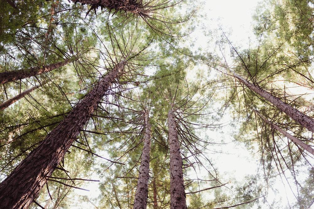 01-mather-redwood-grove-uc-botanical-garden-wedding-vivianchen-007.jpg