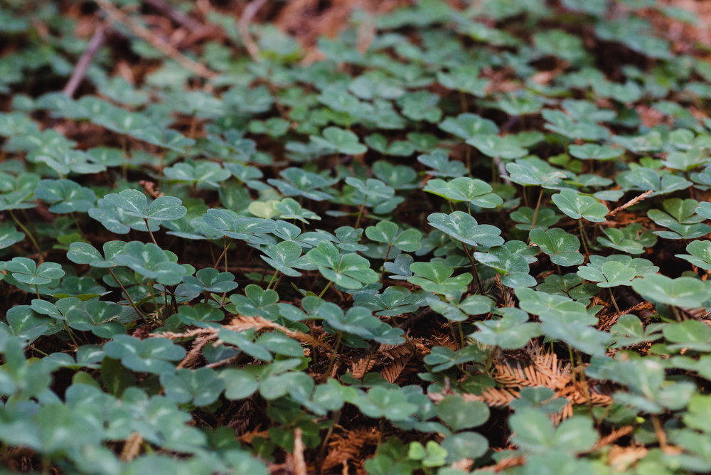 15-mather-redwood-grove-uc-botanical-garden-wedding-vivianchen-009.jpg