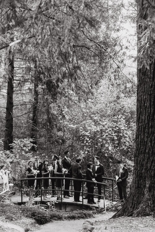 16-mather-redwood-grove-uc-botanical-garden-wedding-vivianchen-094.jpg