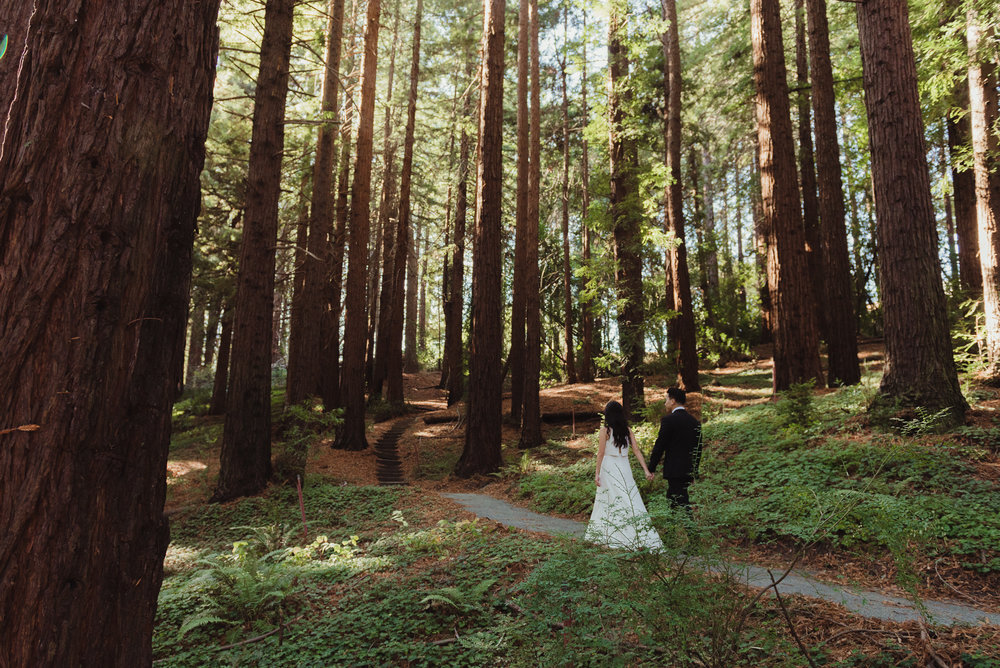 36-mather-redwood-grove-uc-botanical-garden-wedding-vivianchen-350.jpg