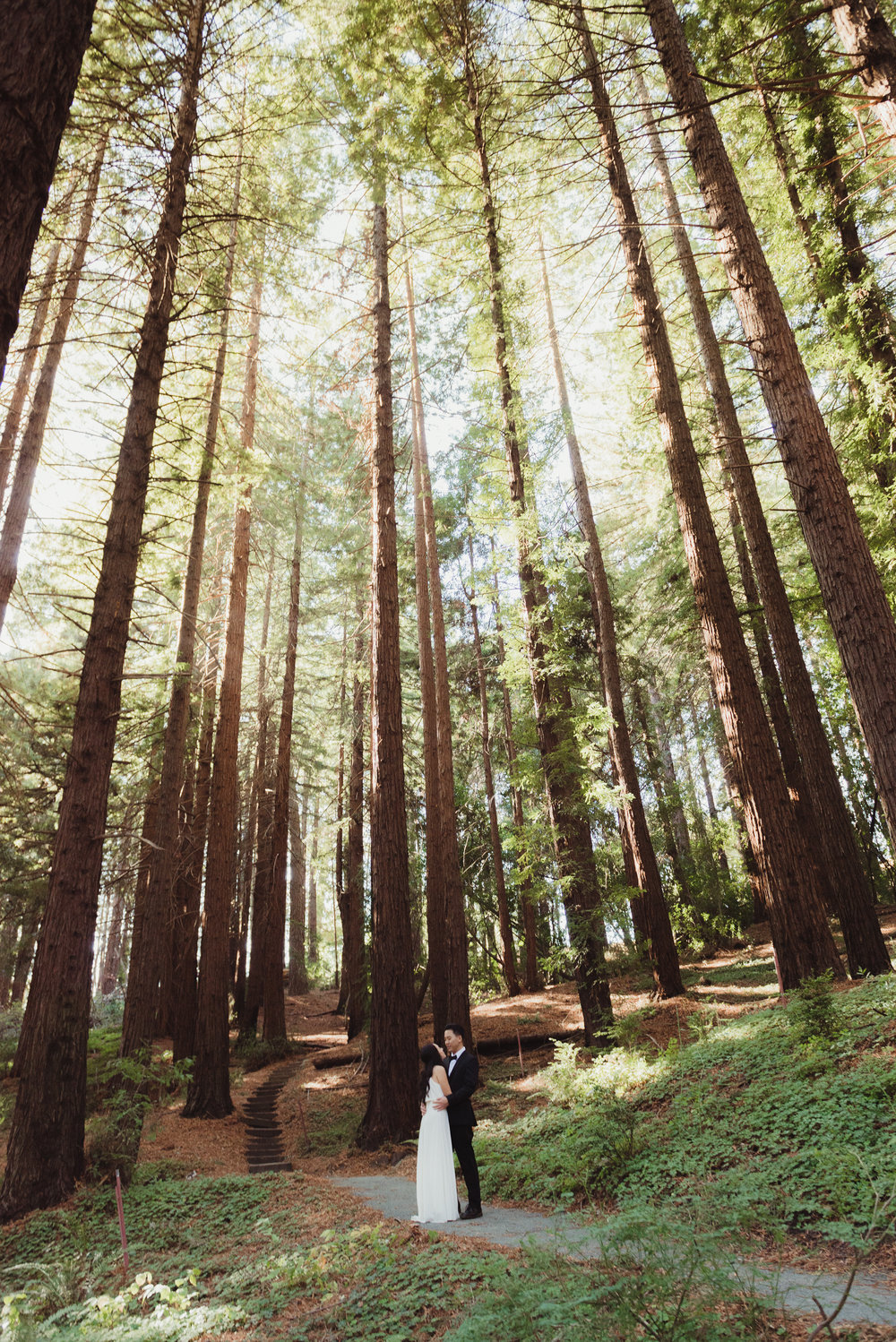 38-mather-redwood-grove-uc-botanical-garden-wedding-vivianchen-354.jpg