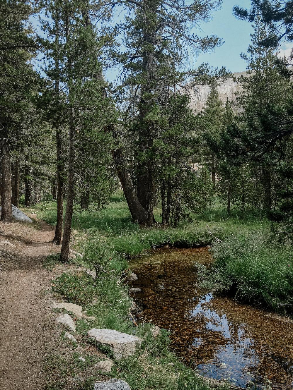 fletcher-creek-trail-high-sierra-camps-yosemite-vivianchen2.jpg
