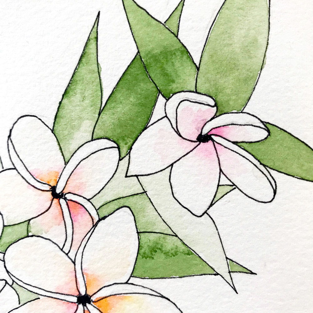 You can see how smoothly the paint blends with water in a wet-on-wet technique, painted plumeria flowers on Arches Cold Press by danielleandco.com
