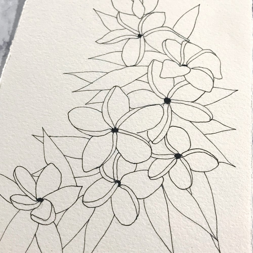 Plumeria flowers drawn on Arches Cold Press paper, by danielleandco.com