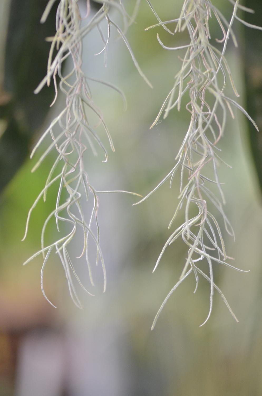 knDSC_3005_NoHo_BotanicGarden_17.JPG