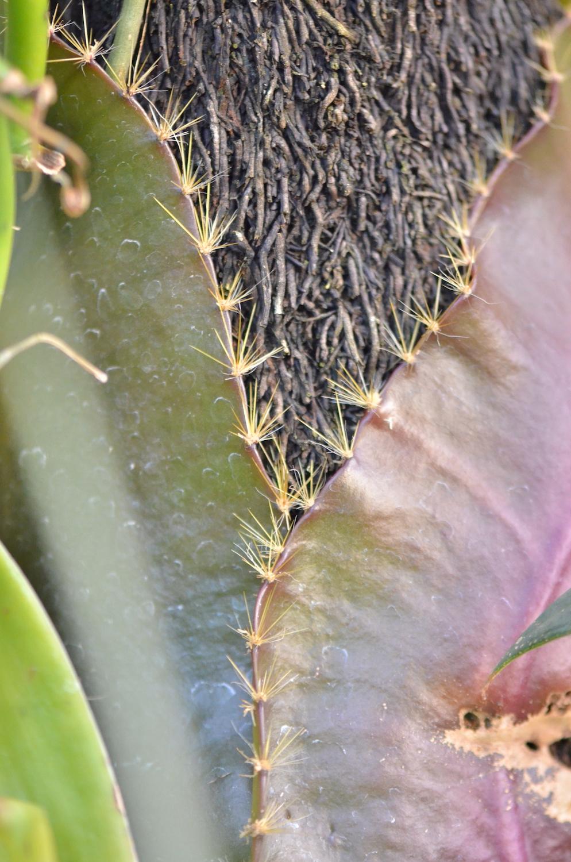 knDSC_3008_NoHo_BotanicGarden_17.JPG
