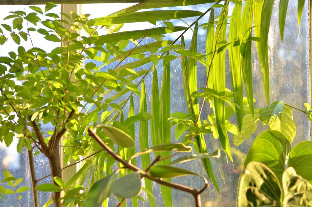 knDSC_3031_NoHo_BotanicGarden_17.JPG