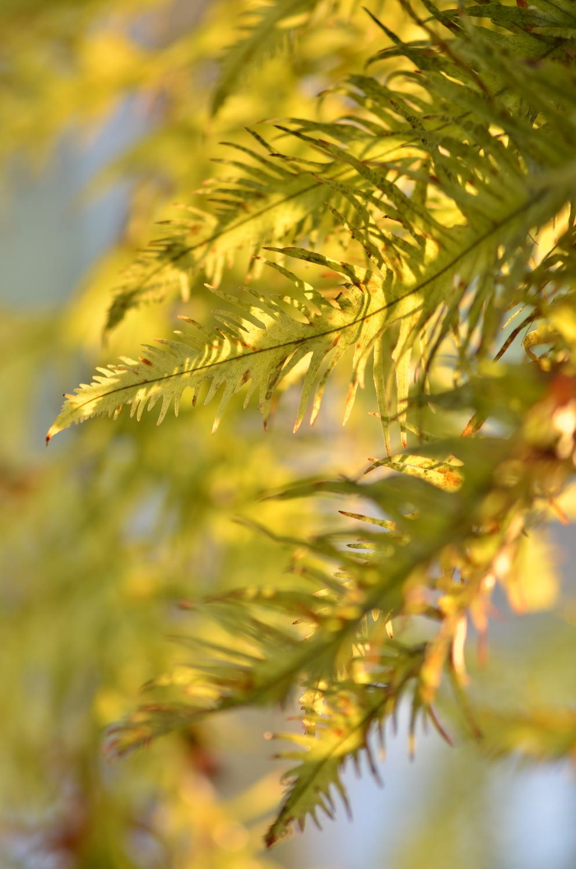 knDSC_3043_NoHo_BotanicGarden_17.JPG
