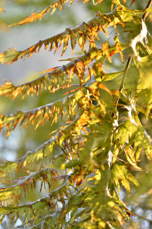 knDSC_3044_NoHo_BotanicGarden_17.JPG