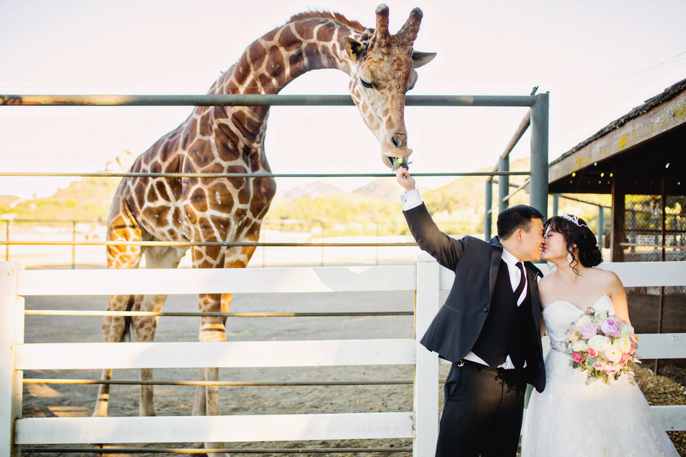 C & J Wedding (Web)-422.jpg