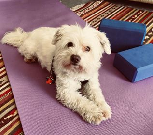 """Scrubbles"" wants to be a Yoga Teacher"