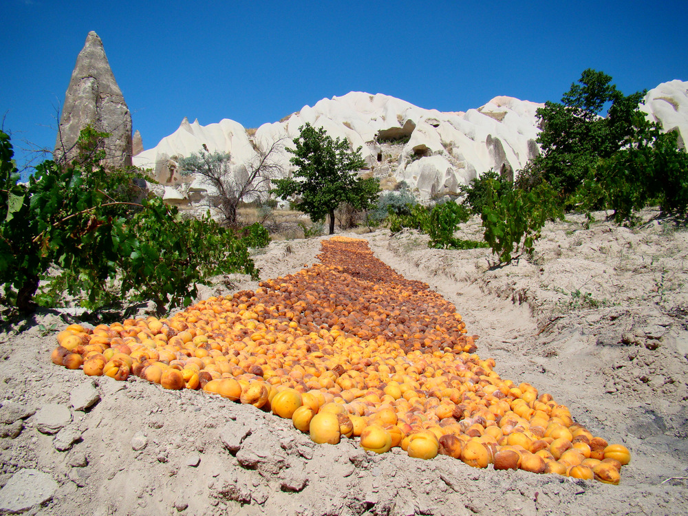 Apricots Drying In Cappadocia