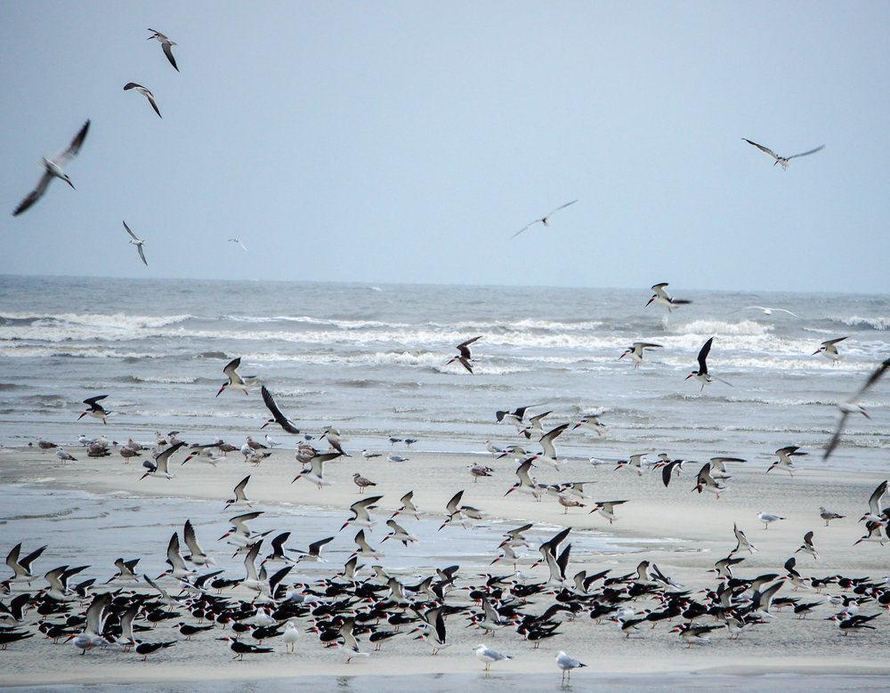 birds on beach-2.jpg