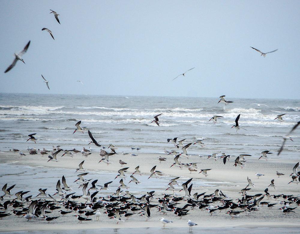 birds on beach-2.jpg
