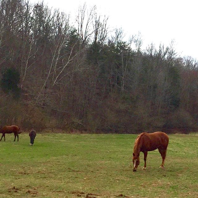 My sweet boy, Sam,  spending time with his buddies.  Thanks Kelli #Sam#feb2018#pasturebuddies#peaceandtranquility#quarterhorses#lovehorses