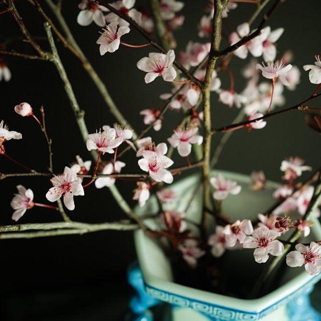 Spring is sneaking in.  #spring2018#aquietstyle  #inspiredbypetals#dearbellagrace